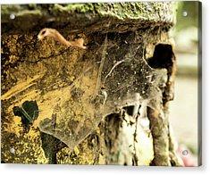 Cobweb Acrylic Print