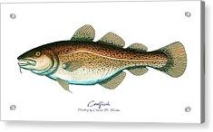 Codfish Acrylic Print