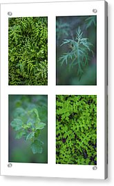 Collage - Sensitive To Green Acrylic Print by Alexander Kunz