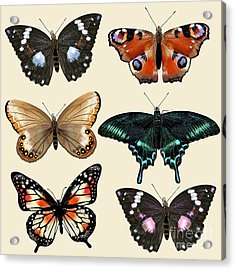 Collection Of Vector Colorful Realistic Acrylic Print