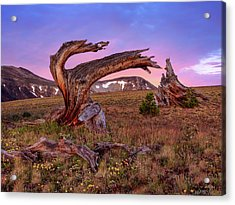 Coloful High Mountain Splendor Acrylic Print by Leland D Howard