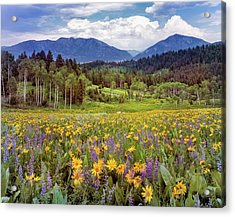 Color Of Spring Acrylic Print