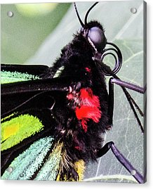 Color Up Close Acrylic Print