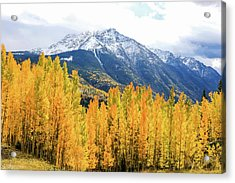 Colorado Aspens And Mountains 2 Acrylic Print