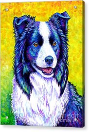 Colorful Border Collie Dog Acrylic Print