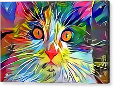 Colorful Calico Cat Acrylic Print