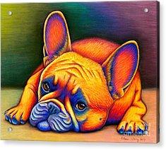 Colorful French Bulldog Acrylic Print
