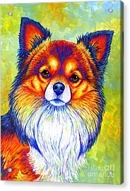 Colorful Long Haired Chihuahua Dog Acrylic Print