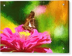 Colorful Silver Spotted Skipper Butterfly Acrylic Print