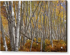 Acrylic Print featuring the photograph Colorful Stick Forest by James BO Insogna