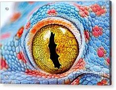 Colorful Tokes Gecko Amazing Eye Macro Acrylic Print