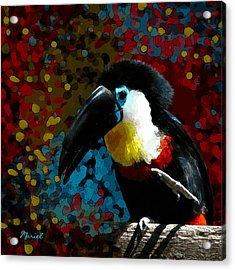 Colorful Toucan Acrylic Print