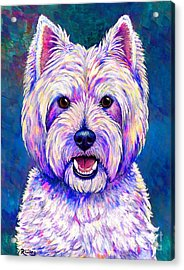 Colorful West Highland White Terrier Blue Background Acrylic Print