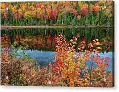 Acrylic Print featuring the photograph Colors Of Aurtumn by Pierre Leclerc Photography