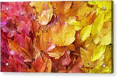 Colors Of Fall - Red To Yellow Acrylic Print