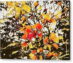 Colourful Leaves Acrylic Print