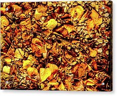 Colours. Autumn Gold Acrylic Print