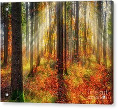 Colours Of Nature 02 Acrylic Print