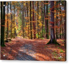 Colours Of Nature Acrylic Print