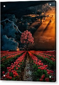 Colours Of The Sky Acrylic Print