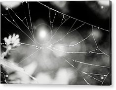 Acrylic Print featuring the photograph Connected by Sue Collura