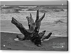 Acrylic Print featuring the photograph Contrasting Textures by Jeni Gray