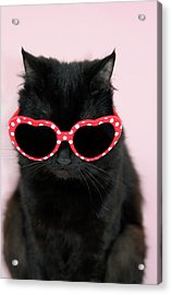 Cool Cat Wearing Sunglasses Acrylic Print by Kelly Bowden