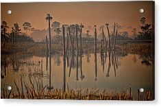 Cool Day At Viera Wetlands Acrylic Print