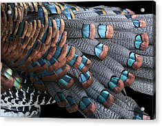 Acrylic Print featuring the photograph Copper-tipped Ocellated Turkey Feathers Photograph by Debi Dalio