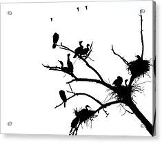 Cormorant's In Silhouette Acrylic Print