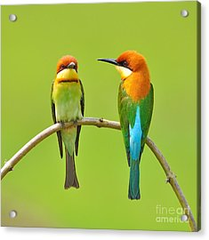 Couple Of Bee Eater Bird Acrylic Print