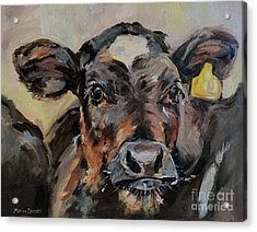 Cow In Oil Paint Acrylic Print