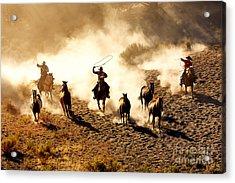 Cowboys Chasing Wilding Horses. Roping Acrylic Print
