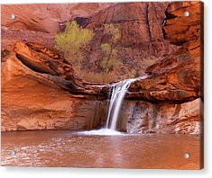 Coyote Gulch Waterfall Acrylic Print by Leland D Howard