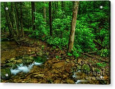 Cranberry Wilderness Stream And Rhododendron Acrylic Print