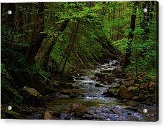 Creek Flowing Through Shady Forest Acrylic Print