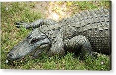 Crocodile Outside Acrylic Print