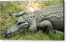 Acrylic Print featuring the photograph Crocodile Outside by Rob D