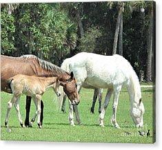 Cumberland Horses Family Portrait Acrylic Print