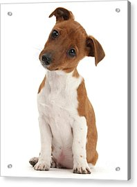 Acrylic Print featuring the photograph Curious by Warren Photographic