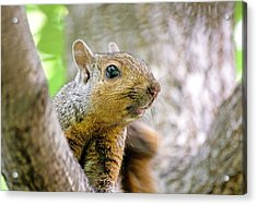 Cute Funny Head Squirrel Acrylic Print
