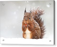 Cute Red Squirrel In The Falling Snow Acrylic Print