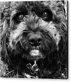 Cutest Dog On The Planet Acrylic Print