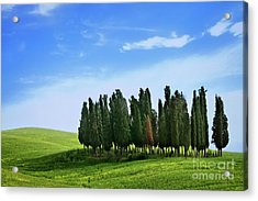 Acrylic Print featuring the photograph Cypress Stand by Scott Kemper