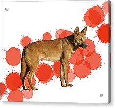 D Is For Dingo Acrylic Print