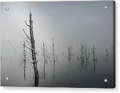 D1087 - Theewaterskloof Trees Acrylic Print