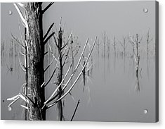D1095 - Theewaterskloof Trees Acrylic Print