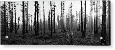 D1098 - Tulbagh Landscape Acrylic Print