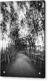 D1797p Acrylic Print