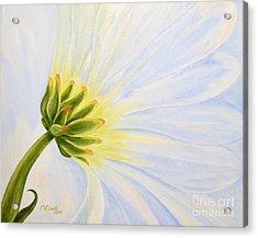 Daisy In The Wind Acrylic Print